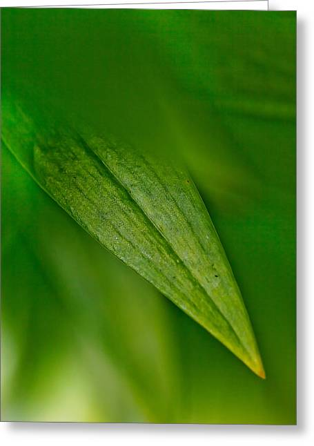 Green Edges Greeting Card by Az Jackson