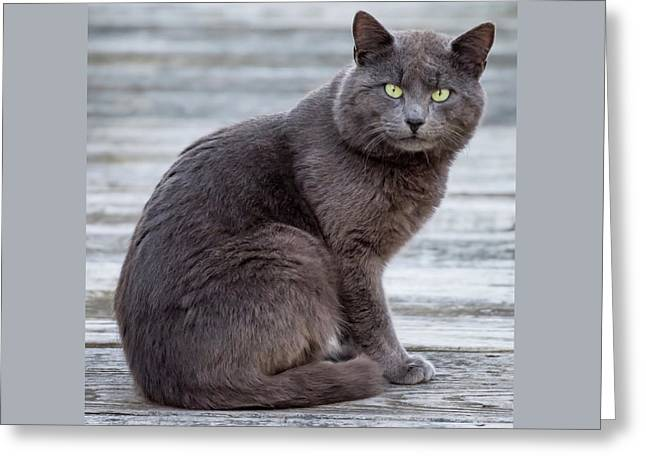 Green Eye Stare Cat Square Greeting Card by Terry DeLuco