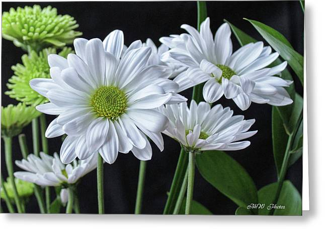 Greeting Card featuring the photograph Green Eyed Daisy by Bonnie Willis