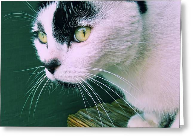 Green Eyed Greeting Card by JAMART Photography