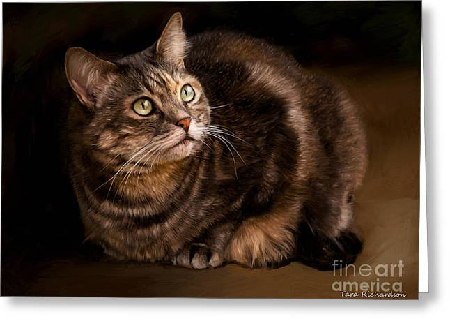 Green Eyed Kitty Greeting Card