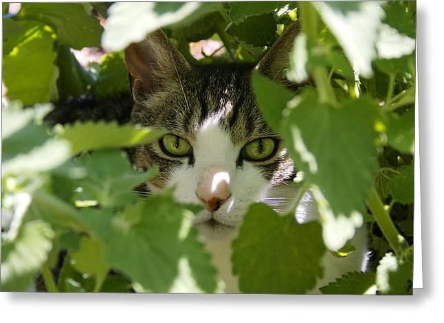 Green Eyes Greeting Card by Orange Cat Art
