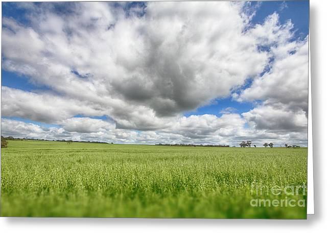Greeting Card featuring the photograph Green Fields 2 by Douglas Barnard