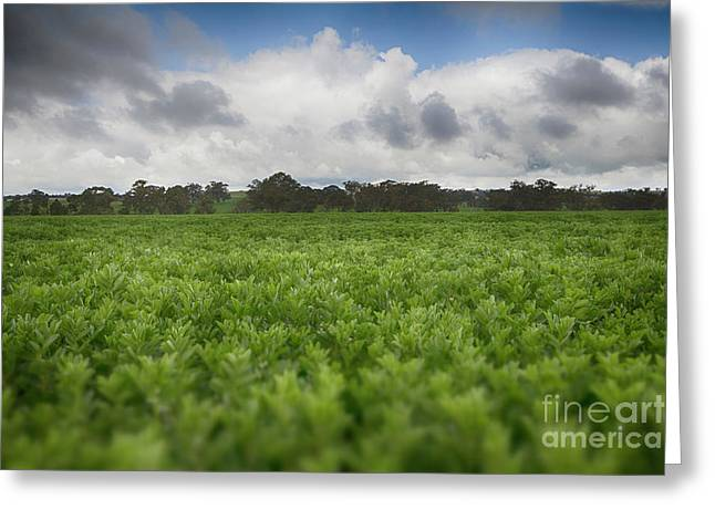 Greeting Card featuring the photograph Green Fields 4 by Douglas Barnard