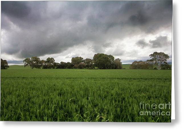 Greeting Card featuring the photograph Green Fields 5 by Douglas Barnard