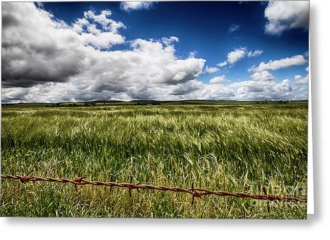 Greeting Card featuring the photograph Green Fields by Douglas Barnard