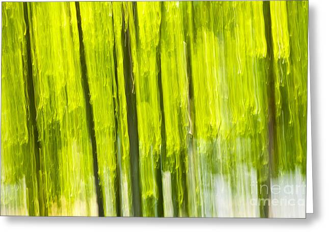 Nature Abstracts Greeting Cards - Green forest abstract Greeting Card by Elena Elisseeva