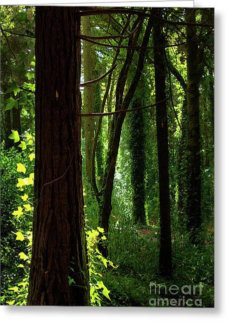 Green Forest Greeting Card by Carlos Caetano