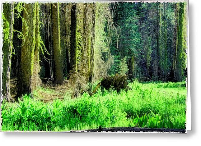 Greeting Card featuring the photograph Green Forest by Michael Cleere