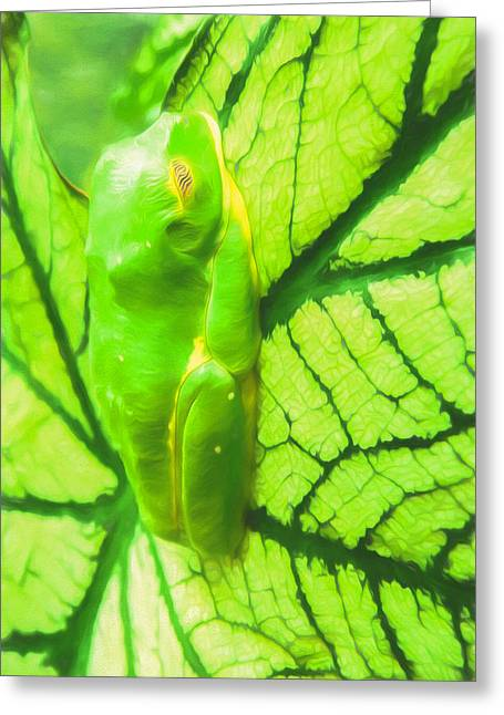 Green Frog Art By Priya Ghose Greeting Card by Priya Ghose