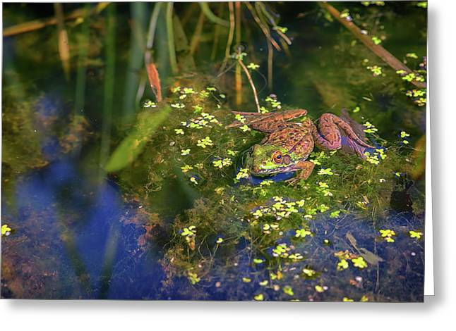 Green Frog In The Pond Greeting Card