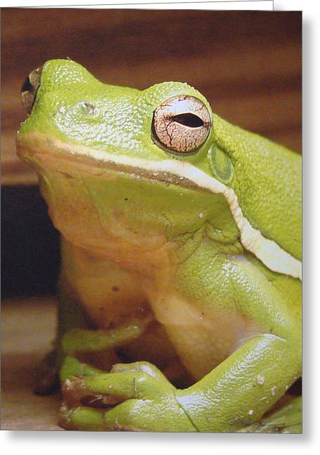 Green Frog Greeting Card by J R Seymour