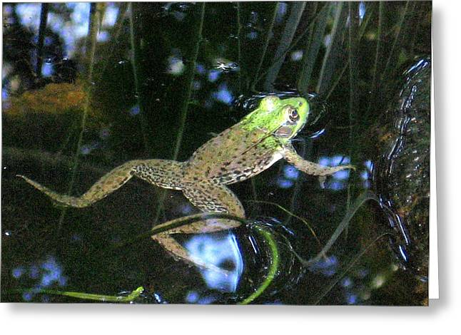 Greeting Card featuring the photograph Green Frog by Patricia Januszkiewicz