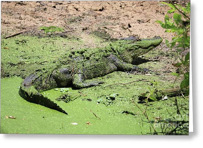 Green Gator Greeting Card