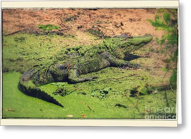 Green Gator With Border Greeting Card