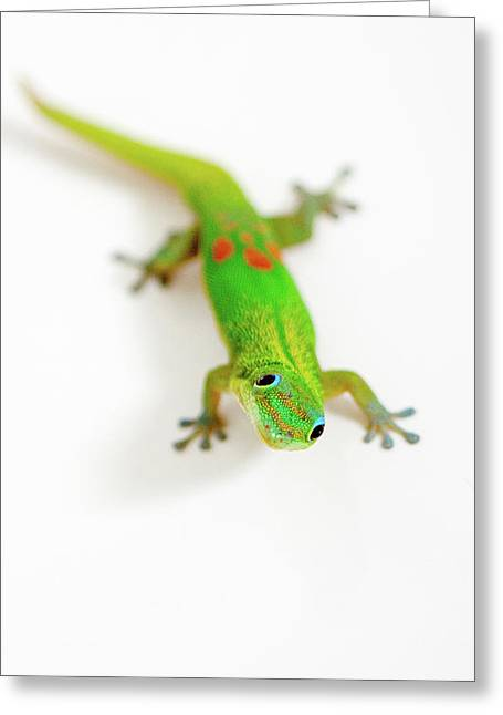 Greeting Card featuring the photograph Green Gecko by Denise Bird