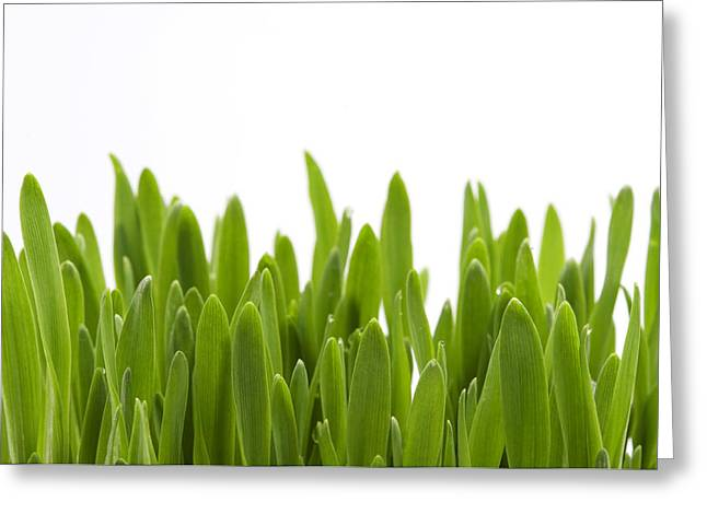 White Background Greeting Cards - Green Grass Greeting Card by Fabrizio Troiani