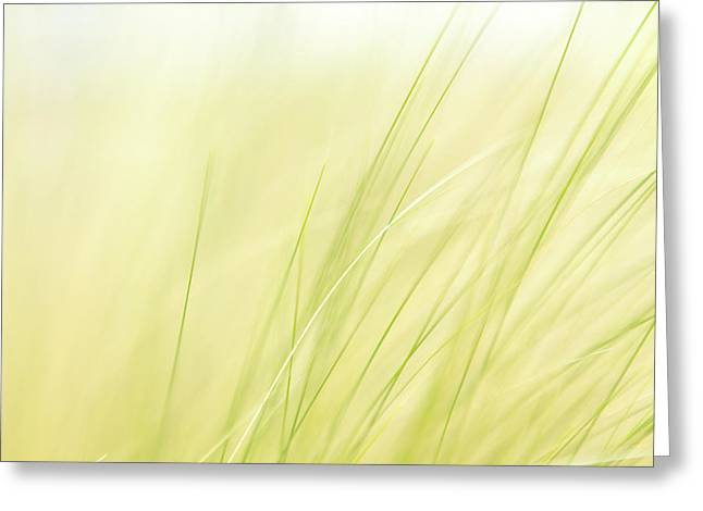 Green Grass In The Breeze Greeting Card