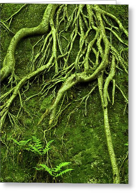 Tree Roots Greeting Cards - Green Growth Greeting Card by Shannon Workman