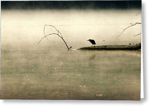Green Heron In Dawn Mist Greeting Card by Kathy Barney