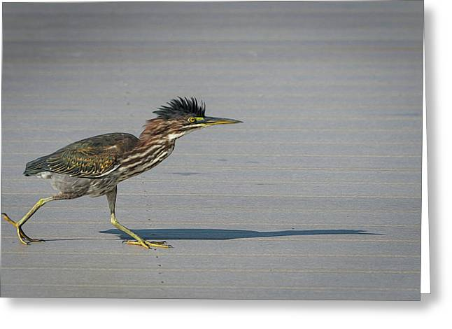 Greeting Card featuring the photograph Green Heron On A Mission by Cindy Lark Hartman
