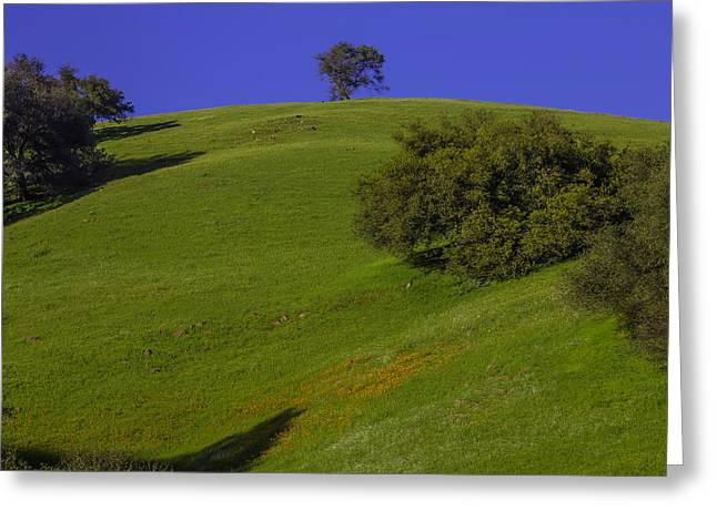 Green Hill With Poppies Greeting Card