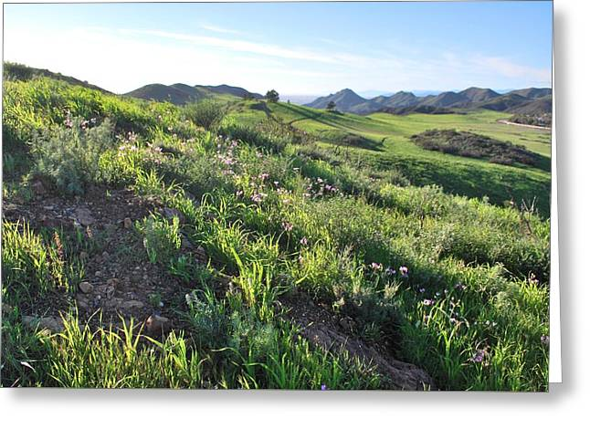 Greeting Card featuring the photograph Green Hills Purple Flowers - Rocky View by Matt Harang