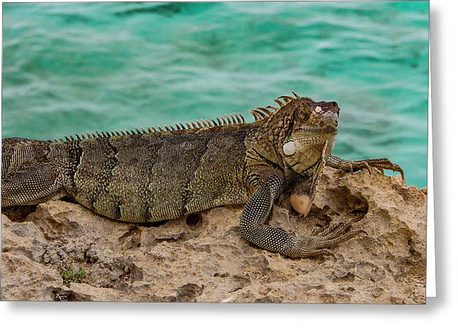 Green Iguana Basking In Sun Greeting Card