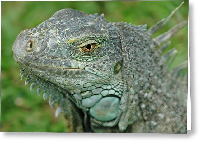 Green Iguana Greeting Card by Mary Lane