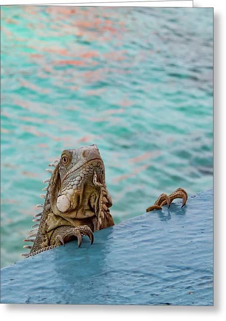 Green Iguana Peering Over Wall Greeting Card