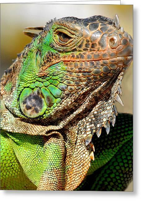 Green Iguana Series Greeting Card