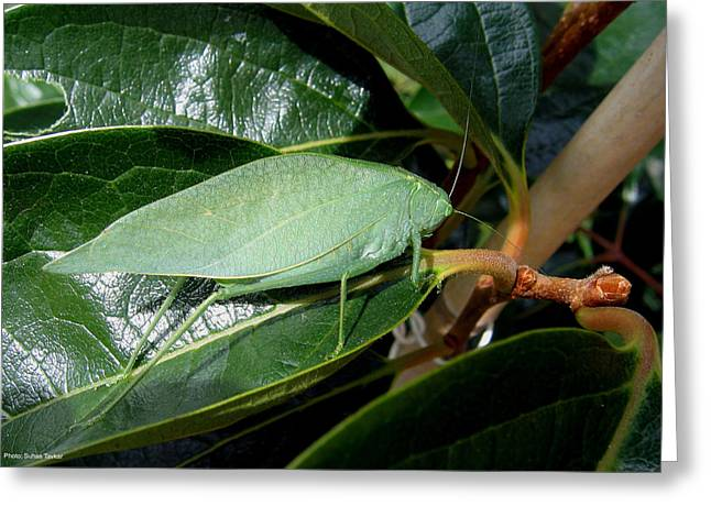 Greeting Card featuring the photograph Green Insect by Suhas Tavkar