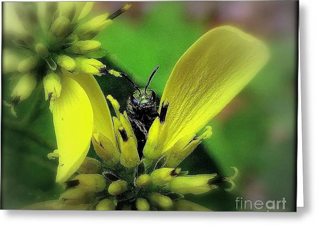 Macro Green Insect Yellow Flower Greeting Card by Len-Stanley Yesh