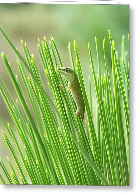 Greeting Card featuring the photograph Green Is Good by Peg Urban
