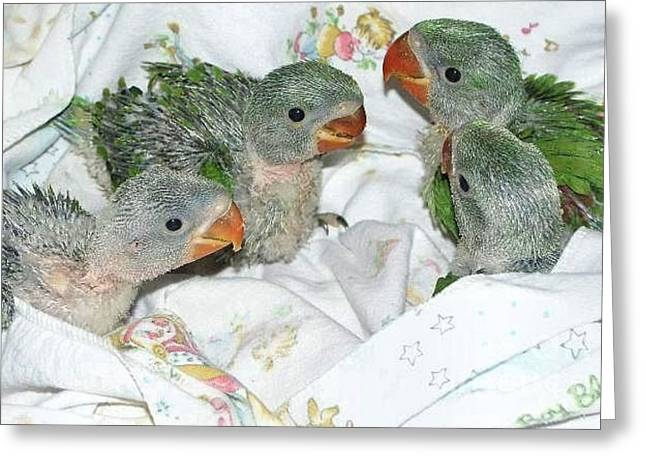 Greeting Card featuring the photograph Green Is In by Debbie Stahre