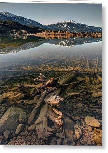 Greeting Card featuring the photograph Green Lake Ironwood by Pierre Leclerc Photography