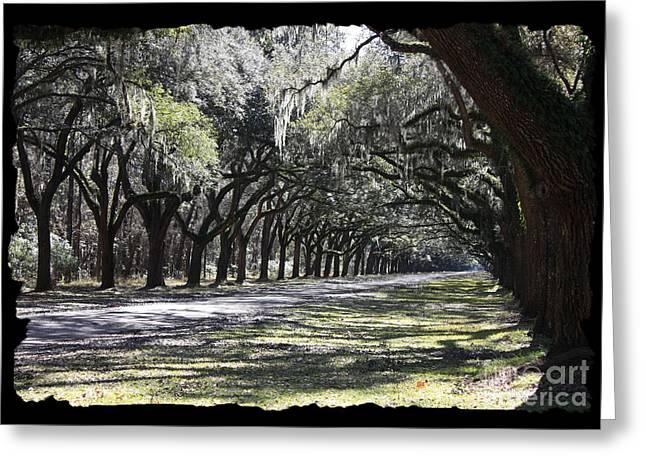 Green Lane With Live Oaks - Black Framing Greeting Card by Carol Groenen