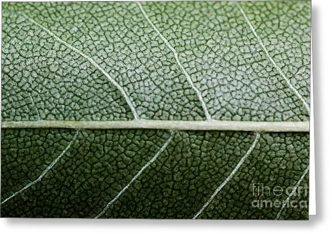 Green Leaf Geometry Greeting Card