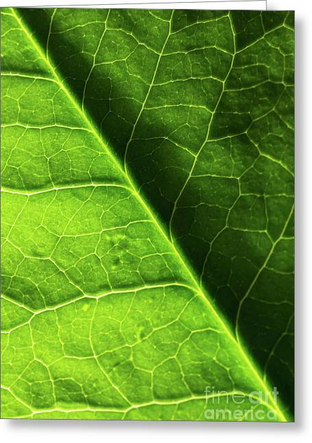 Greeting Card featuring the photograph Green Leaf Veins by Ana V Ramirez