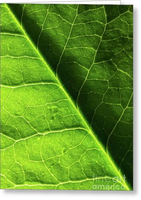 Green Leaf Veins Greeting Card by Ana V Ramirez
