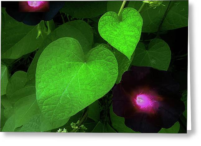 Green Leaf Violet Glow Greeting Card