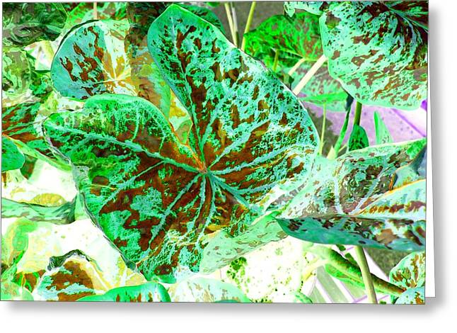 Greeting Card featuring the photograph Green Leafmania 1 by Marianne Dow