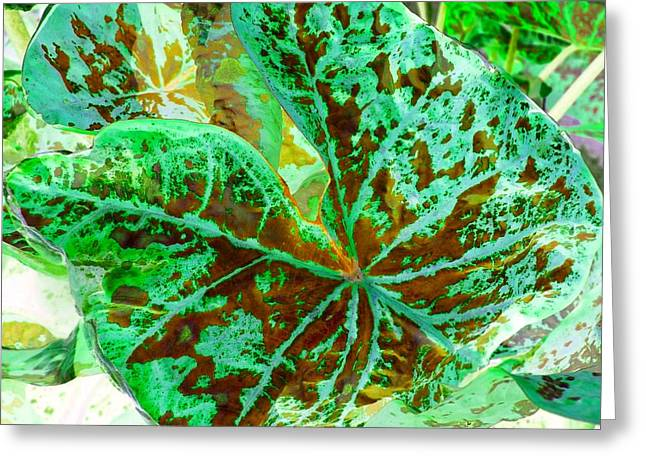 Green Leafmania 2 Greeting Card by Marianne Dow