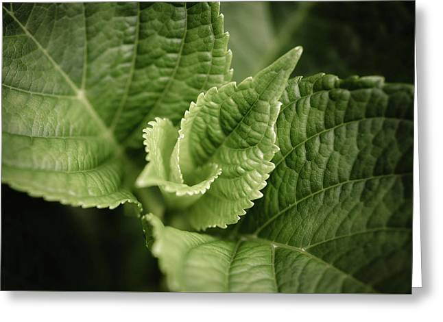 Greeting Card featuring the photograph Green Leaves Abstract II by Marco Oliveira