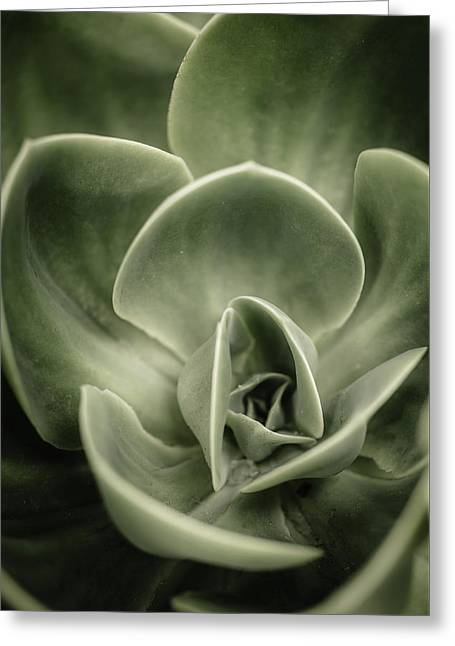 Greeting Card featuring the photograph Green Leaves Abstract IIi by Marco Oliveira
