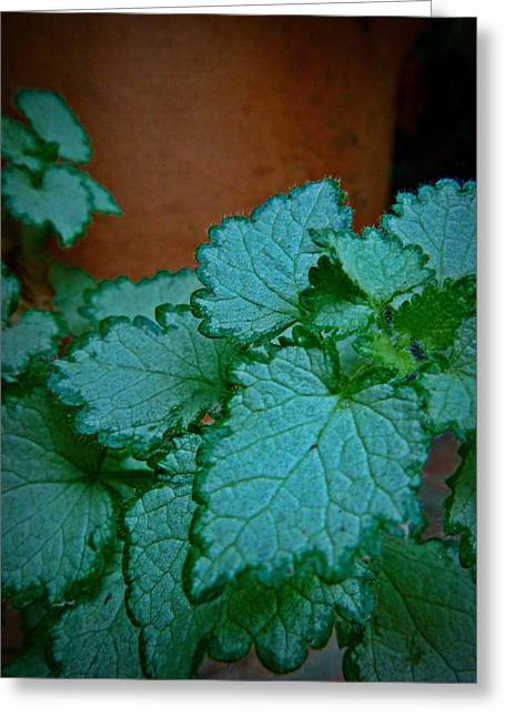Green Leaves And Terra Cotta Greeting Card by Patricia Strand