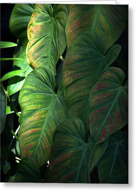 Green Leaves At Akaka Falls Greeting Card by Lori Seaman