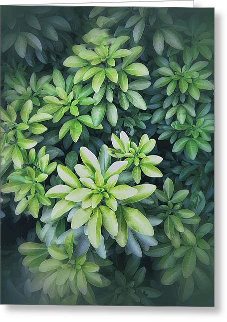Green Leaves Background Greeting Card by Tom Gowanlock