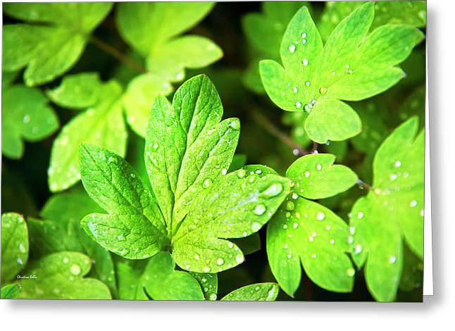 Greeting Card featuring the photograph Green Leaves by Christina Rollo