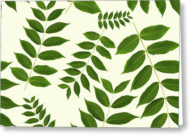 Greeting Card featuring the mixed media Botanical Pattern by Christina Rollo
